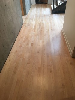 hardwood floor repair service boulder co